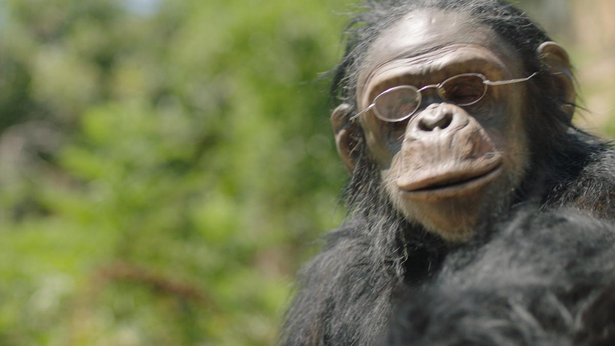 monkey19.jpg